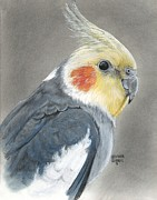 Grey Pastels Prints - Cockatiel Print by Heather Gessell