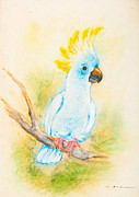 Chalk Drawing Metal Prints - Cockatoo Metal Print by Kurt Tessmann