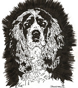 Pooch Drawings Posters - Cocker Spaniel - Nutmeg Poster by Jerrett Dornbusch