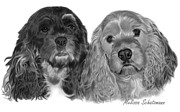 Spaniels Drawings Framed Prints - Cocker Spaniels Framed Print by Melissa Schatzmann