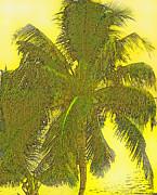 Ian  MacDonald - Coconut Palm