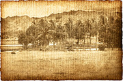 Worn In Art - Coconut Palms In Valley by Skip Nall