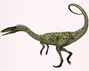 Corey Ford - Coelophysis Profile
