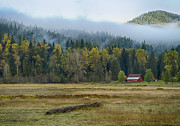 Foggy Day Art - Coeur d Alene River Farm by Idaho Scenic Images Linda Lantzy
