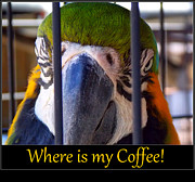 Parrot Art Print Framed Prints - Coffeee Framed Print by Sheri McLeroy