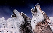 Wolf Howling Paintings - Cold Cry by Daniel  Pierce
