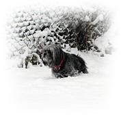Cold Feet Print by Sharon Lisa Clarke
