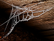 Crystalline Photos - Cold Web by Odd Jeppesen