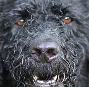 Cold Wet Nose Print by Michelle Orai