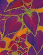 Graphic Pastels - Coleus Gone Wild by Anne Katzeff