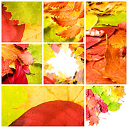 Autumn Foliage Pyrography Prints - Collage Colorful Print by Boon Mee