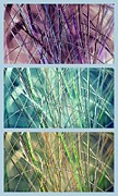 Multiples Photos - Collage of See Grass by Susanne Van Hulst