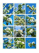 Collage Spring Blossoms 1 Print by Alexander Senin
