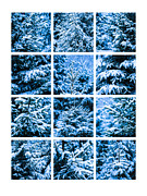 Assemblage Prints - Collage Winter Snow Christmas Tree Print by Alexander Senin