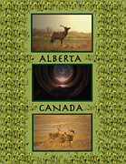 Digital Collage Photo Posters - Collection Of Alberta Beauty Poster by Laura Bentley