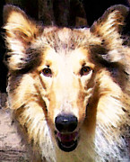 Dog Rescue Digital Art Metal Prints - Collie Dog Art - Sunshine Metal Print by Sharon Cummings