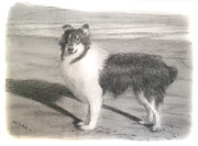 Ocean Shore Drawings Prints - Collie Dog Portrait Print by Edward Pollick