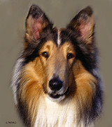 Breed Pastels Posters - Collie in Pastel Poster by George Pedro