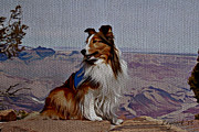 Collie Digital Art Metal Prints - Collie Metal Print by Jodi Laycock