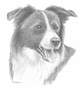 Sheepdog Drawings - Collie by Mary Mayes