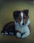 Collie Painting Framed Prints - Collie Puppy Framed Print by Tilden Orton