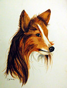 Collie Painting Framed Prints - Collie Framed Print by Zelma Hensel