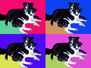 Collies Digital Art Posters - Collies - Two Best Buds Poster by Stephen Conroy