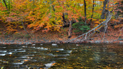 New England Fall Foliage Art - Color Along the Shepaug by Bill  Wakeley
