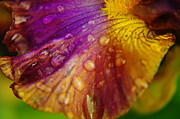 Color And Droplets Print by Jeff  Swan