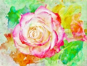 Roses - Color and Rose by Cathie Tyler