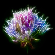 Plant Digital Art - Color Burst by Adam Romanowicz