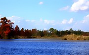 Florida Rivers Photo Prints - Color Of Fall Print by Debra Forand