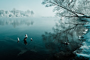 Winter Landscapes Posters - Color of Ice Poster by Davorin Mance