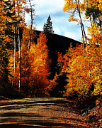Evening Light Prints - Colorado Aspen Road Print by Terril Heilman