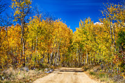 Fall Colors Autumn Colors Posters - Colorado Autumn Back Country Road Poster by James Bo Insogna