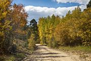 James BO  Insogna - Colorado Autumn High Elevation Rocky Mountain 4 Wheeling Dirt Ro