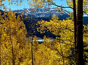 Sandee Gass - Colorado Autumn