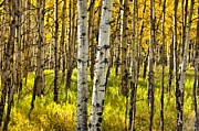 Outside Mixed Media Framed Prints - Colorado Fall Aspens 6 Framed Print by Angelina Vick