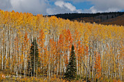 Rachele Morlan - Colorado Fall Colors