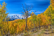 Fall Colors Autumn Colors Posters - Colorado Fall Foliage Back Country View Poster by James Bo Insogna