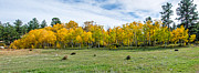 Fort Collins Art - Colorado Fall Panorama by  Keith Ducker