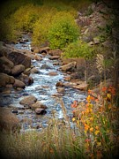 Frizzell Posters - Colorado Fall Stream Poster by Michelle Frizzell-Thompson