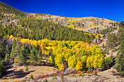 Autumn Landscape Art - Colorado Gold and Blue by James Bo Insogna