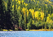 Lush Colors Posters - Colorado Mountain Lake in Fall Poster by Amy McDaniel