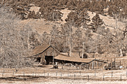 Photography Prints Prints - Colorado Rocky Mountain Barn Sepia Print by James Bo Insogna