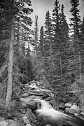James BO  Insogna - Colorado Rocky Mountain Flowing Stream BW