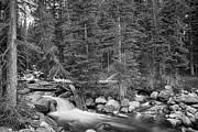 James BO  Insogna - Colorado Rocky Mountain Forest Stream BW