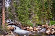 James BO  Insogna - Colorado Rocky Mountain Forest Stream