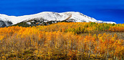 Fall Colors Autumn Colors Posters - Colorado Rocky Mountain Independence Pass Autumn Pano 2 Poster by James Bo Insogna