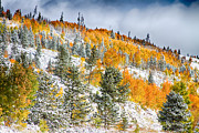 Fall Colors Autumn Colors Posters - Colorado Rocky Mountain Snowy Autumn Colors Poster by James Bo Insogna